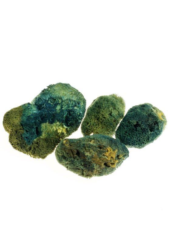 cesare-griffa-matter-Sponges