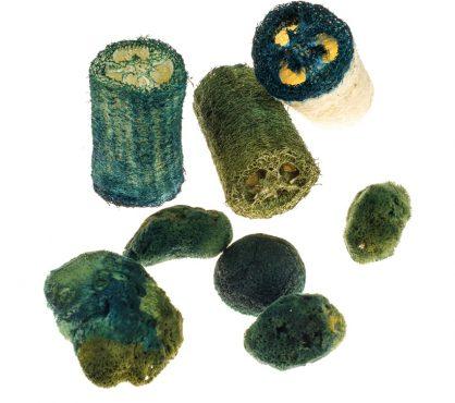 cesare-griffa-works-Algalized-Sponges-and-Luffas